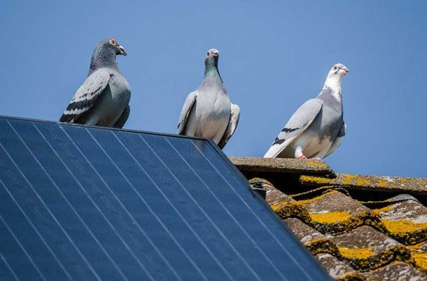 Bird Proofing Your Commercial Premises